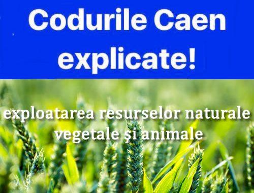Coduri Caen Explicate – Exploatarea Resurselor Naturale Vegetale şi Animale